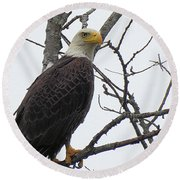 American Bald Eagle Pictures Round Beach Towel