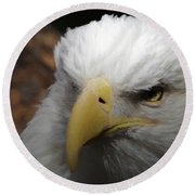 American Bald Eagle Portrait 3 Round Beach Towel by Ernie Echols