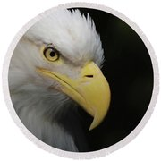 American Bald Eagle Portrait 4 Round Beach Towel by Ernie Echols