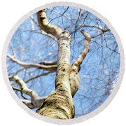 Round Beach Towel featuring the photograph American Beech Tree by Christina Rollo