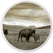 American Bison Calf And Cow Round Beach Towel