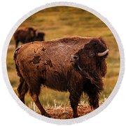 Round Beach Towel featuring the photograph American Bison by Chris Bordeleau