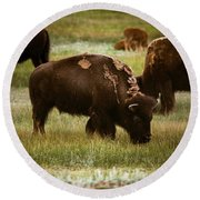 Round Beach Towel featuring the photograph American Bison Grazing by Chris Bordeleau