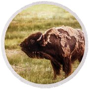Round Beach Towel featuring the photograph American Bison Into The Wind by Chris Bordeleau