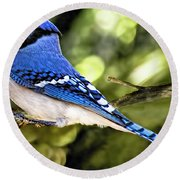 Blue Jay Bokeh Round Beach Towel