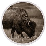 Round Beach Towel featuring the photograph American Buffalo Grazing by Chris Bordeleau