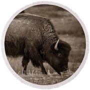 American Buffalo Grazing Round Beach Towel