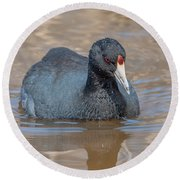 American Coot Dmsb0140 Round Beach Towel
