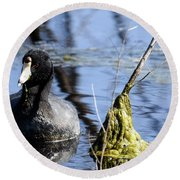 American Coot Round Beach Towel by Gary Wightman