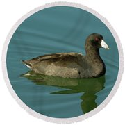 American Coot Round Beach Towel
