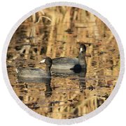 American Coots Round Beach Towel