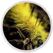 American Dagger Moth Caterpillar Round Beach Towel