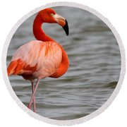 American Flamingo Round Beach Towel