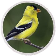Round Beach Towel featuring the photograph American Golden Finch by William Lee
