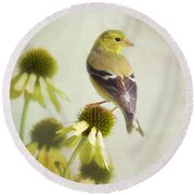 American Goldfinch On Coneflower Round Beach Towel