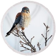 American Kestrel At Bender Round Beach Towel