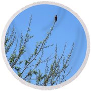 American Kestrel Atop Pecan Tree Round Beach Towel
