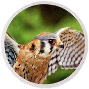 American Kestrel - Bird Of Prey Round Beach Towel