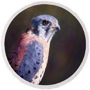 American Kestrel Portrait Round Beach Towel