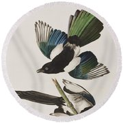 American Magpie Round Beach Towel by John James Audubon