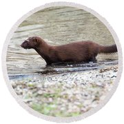 Round Beach Towel featuring the photograph American Mink by Ricky L Jones