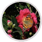 American Painted Lady On Camelia Round Beach Towel