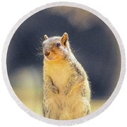 American Red Squirrel Round Beach Towel