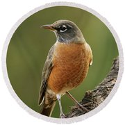 Round Beach Towel featuring the photograph American Robin by Doug Herr