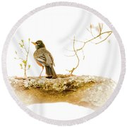 American Robin In Spring Round Beach Towel