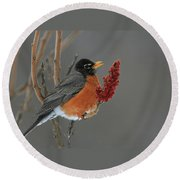 American Robin On Sumac Round Beach Towel