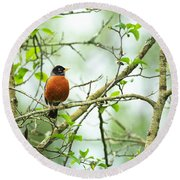 American Robin On Tree Branch Round Beach Towel