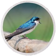 American Tree Swallow Round Beach Towel