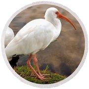 American White Ibis Round Beach Towel