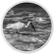 Round Beach Towel featuring the photograph American White Ibis In Black And White by Chrystal Mimbs