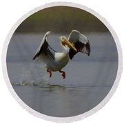 American White Pelican Da 2 Round Beach Towel by Ernie Echols