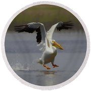 American White Pelican Da 3 Round Beach Towel by Ernie Echols