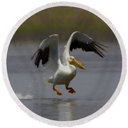 American White Pelican Da 4 Round Beach Towel by Ernie Echols