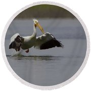 American White Pelican Da Round Beach Towel by Ernie Echols