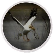 American White Pelican Da Square Round Beach Towel by Ernie Echols