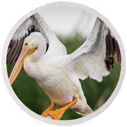 American White Pelican Perched Round Beach Towel
