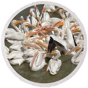 American White Pelicans Round Beach Towel by Eunice Gibb