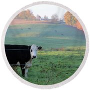 Amish Cow Early Morning  5788 Round Beach Towel