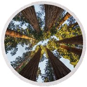 Amongst The Giant Sequoias Round Beach Towel by Alpha Wanderlust