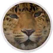 Amur Leopard Dp Round Beach Towel