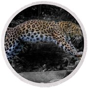 Amur Leopard On The Hunt Round Beach Towel