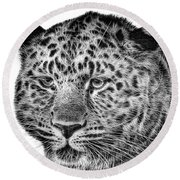 Amur Leopard Round Beach Towel by John Edwards