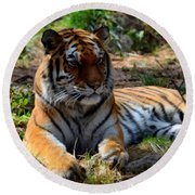 Round Beach Towel featuring the mixed media Amur Tiger 1 by Angelina Vick