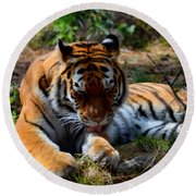 Round Beach Towel featuring the mixed media Amur Tiger 2 by Angelina Vick