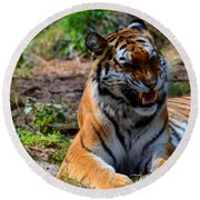Round Beach Towel featuring the mixed media Amur Tiger 3 by Angelina Vick
