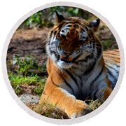 Round Beach Towel featuring the mixed media Amur Tiger 4 by Angelina Vick